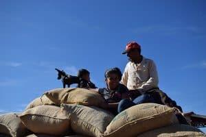Transporte de café gourmet de orígen Brasil
