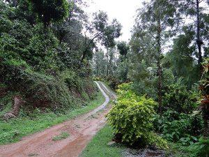 plantación arábica café áfrica del este